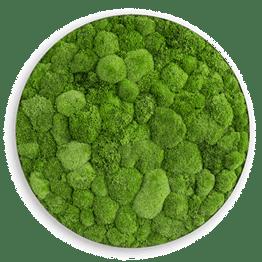 Озеленення мохом