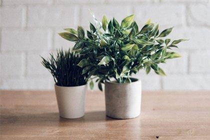 Рослини в кашпо