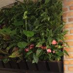 Композиции из живых растений на стене в шоу-руме