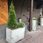 Кашпо из бетона с растениями