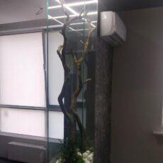 Дерево в акваріумі