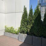 Рослини в кашпо, Кашпо з бетону
